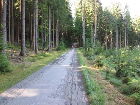 Silnice smrkovým lesem